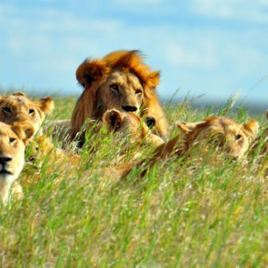 7-Day Explore Untamed Selous, Mikumi & Ruaha