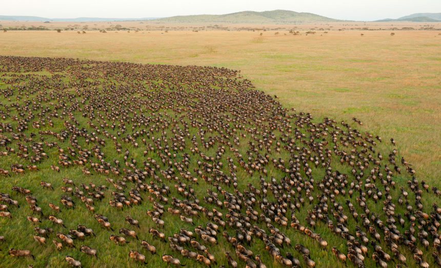 Serengeti Great Migrations – 6 Steps to Answer its Ring of Nature 2