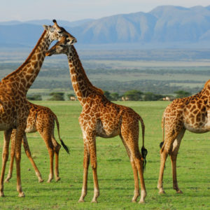 6-Day East Africa Resident- Serengeti Safari