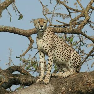3 Day: Land of Serengeti & Ngorongoro