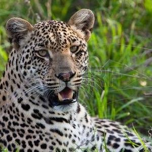 4 Days – Mikumi & Ruaha National Park