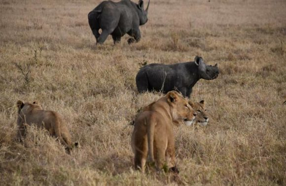 4 Day – Serengeti & Ngorongoro