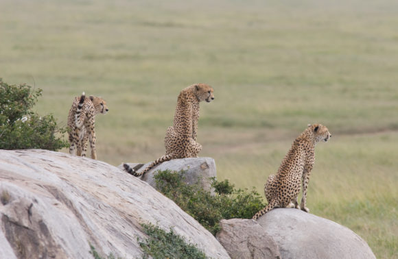 6 – Day: Africa Natural Wonders Safari